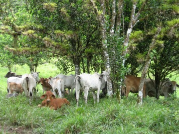 Bermejo Cascadas Santa Fe Veraguas Panama